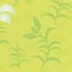 Lys en fleurs et en boutons - zoom